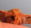 haertstitch: (I O moth)