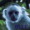 fuzzybluemonkeys: fuzzy blue monkey (pretty)