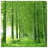 beautifulsheen: bright green woods, trees formin a path way ()