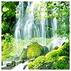 beautifulsheen: a waterfall fallin on mossy rocks in the woods (waterfall)