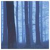 beautifulsheen: tree trunks at night, shrouded in blue mist (Dream-mist)
