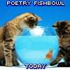 ysabetwordsmith: Cats playing with goldfish (fishbowl)