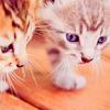 raaj: (kittens)