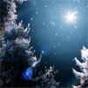 sarashina: (Signal flare)