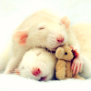 recessional: two white rats and a tiny teddy bear (personal; rat-pile = argument invalid)