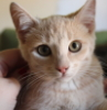 maeve66: (Devlin kitten)