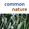 common_nature: common nature grass (common nature grass)