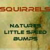 auburn: Text: Squirrels Little Speed Bumps (Squirrels)