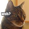 mathsnerd: ((cat) wuh?)