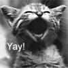 """gritkitty: Happy kitten says """"Yay!"""" (yay)"""