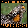 carose59: political (XSave the Texas Prairie Chicken!)