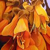 mab_browne: Yellow kowhai flowers, from a Michael Mayhew painting (New Zealand)
