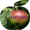 tibicina: (Apple)