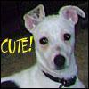 briarwood: My dog Poppy (Poppy)
