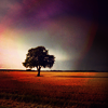 cooglie_mooglie: (stock - tree)