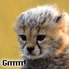 manicdak: (bb cheetah) (Default)