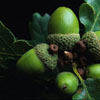 furtech: (acorn)