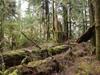 furtech: (rainforest-moss on fallen logs)