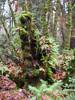 furtech: (rainforest stump)