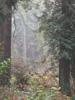 furtech: (Seward Park mist)