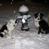 furtech: (snowdogs)