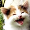 neqs: A picture of a very happy-looking kitten. (gleekitty)