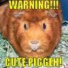 ariestess: (cute piggeh!)