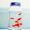 pohmelyatsya: (If fishes were wishes)