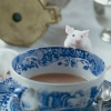 ext_14419: the mouse that wants Arthur's brain (tea)