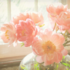 marika_kailaya: pink flowers on a bright windowsill (house; crack the shutters open wide)