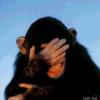 lavlay: (обезьянка)