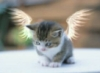 lavlay: (котик-ангел)