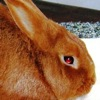 gezellig: (-mysterious bunny-)