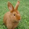 gezellig: (-direct bunny-)