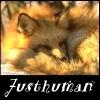 justhuman: fox curled up to sleep (fox sleeping)