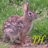 justhuman: (bunny2)