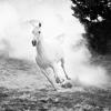 alwaysenduphere: (misc//wild horses won't hold me back)
