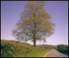 epistrophia: Picture of a springtime tree by the road into my village (Default)