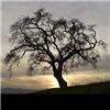 grimmerdhore: It's a tree (pic#4453165)