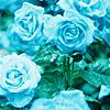 svgurl: (misc: blue roses)