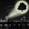 likelike_love: (pip, treehouse)