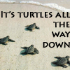 ultranos: baby turtles on the shore with text: it's turtles all the way down (science has failed me)