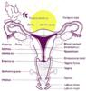 merchimerch: (uterus)