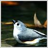 sofiaviolet: photo of a bird (birds for brains)