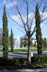 onyxlynx: Some trees and a fountain at a cemetery (A Fine and Private Place)
