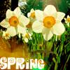 moon_chylde: (spring - daff)