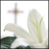 ysobel: An Easter lily, with an out-of-focus cross in the background (easter)