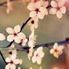 okaasan59: (spring flowers)