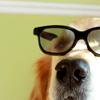 harlowisms: (Smart I am!!!)