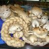 cabell: bread animals (photos)